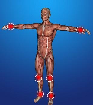 Структура мышц тела человека